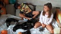 Film chiots chiens loups tchécoslovaques âgés 11 jours Elevage des Loups d'Akairo 2013