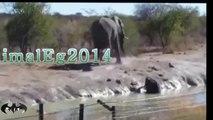 ثورة قطيع الفيلة لأنقاذ رضيع منهم من الغرق فى مجرى البحيرة