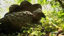 Homenaje al Planeta Tierra 2011 - Dia de la Tierra