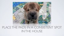 [Puppy Training Tips] How Do I Use Puppy Pads When Housebreaking a Dog?