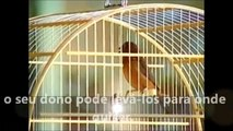 Há escolas que são gaiolas e há escolas que são asas- textos de Rubem Alves