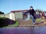 Adestramento de cães - Ataque - Pastor Alemão - Sadan - Pérsio - Adestrador - 19 82068292