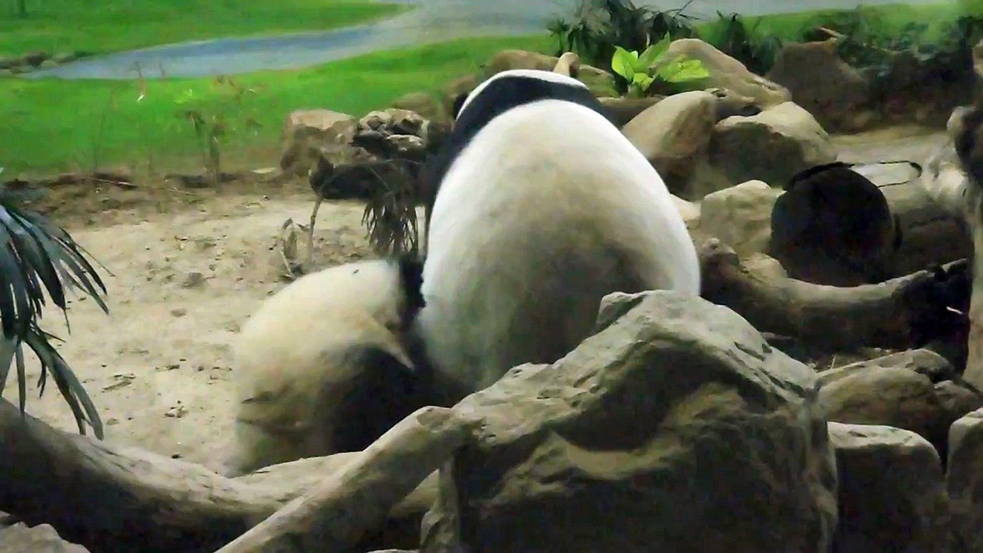 2014/09/08中秋節下午B場圓仔玩木頭記之三,還中了中秋節威力圓大獎呢~