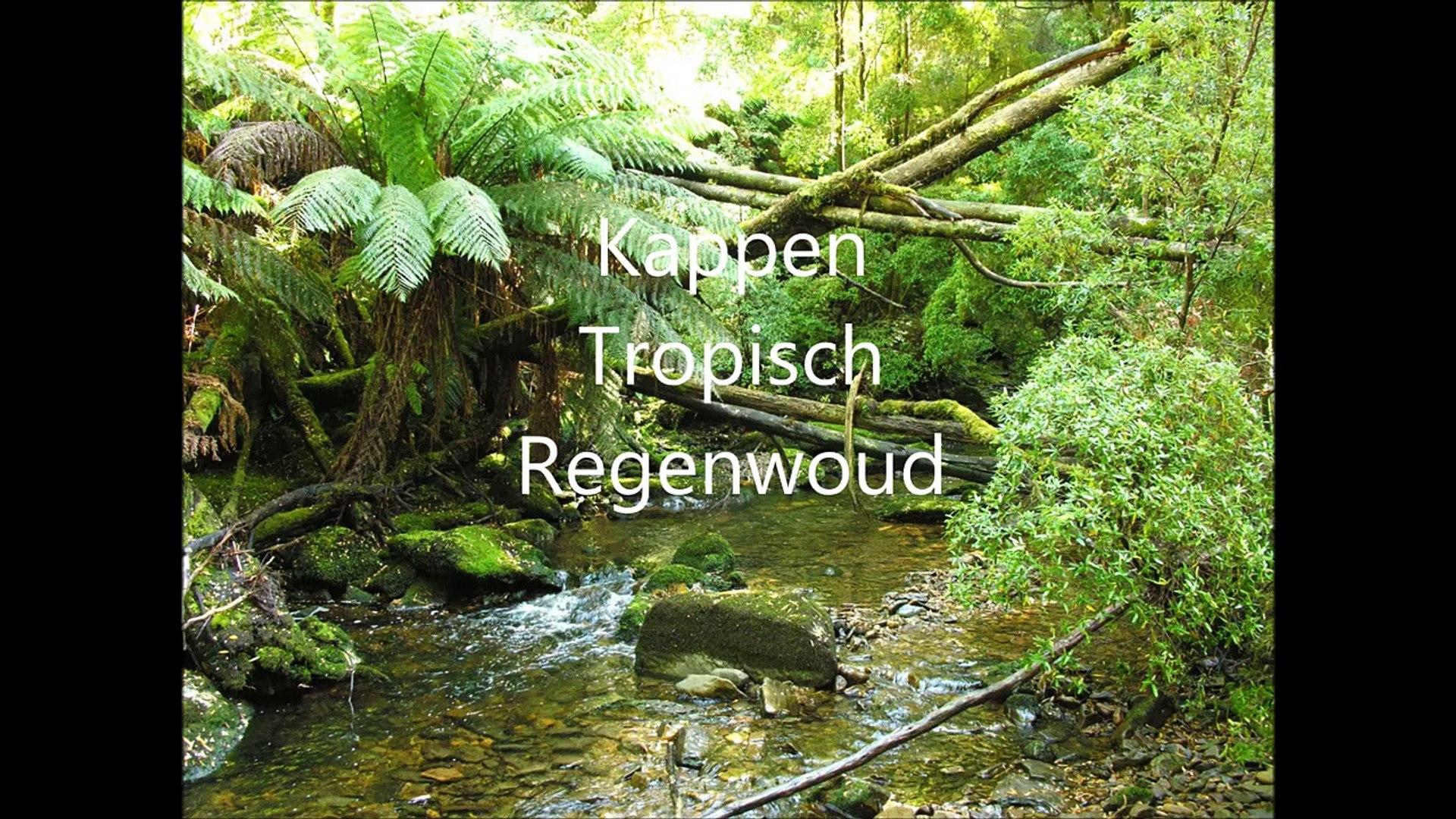 Filmpje Kappen Tropisch Regenwoud Wlmp 456778