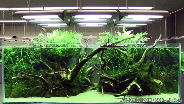 [ADA view 424] Follow-up video of NA Gallery aquariums.