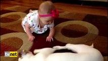Sevimli bebeğe köpekten emekleme dersi