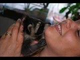 Mein Baby Waschbär/ meu bebe guaxinim/ My baby racoon/ Mi bebe mapache mio bebe procione