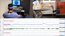 Mind Control Machine: Human wags rat's tail using mind control interface