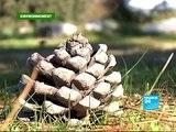 FRANCE 24 Environnement - ENVIRONNEMENT - Développement durable et politique: tous en campagne!