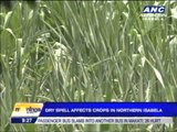 Dry spell affects P11M crops in Northern Isabela
