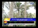 Aquino signs law regulating cutting of coconut trees