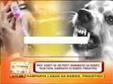 Around 300 Pinoys die of rabies every year: WHO