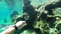 Snorkeling - Hydra Island - Greece 2014 1080p HD