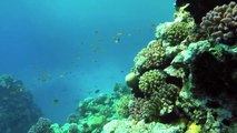 Jaz Aquamarine Holiday Hurghada Egypt, World Diving Red Sea, GoPro Hero 3+ Snokeling Coral Reefs