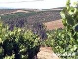 Wine 101: Champagne &  Sparkling Wines