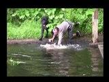sauvetage d'un chien, Un maître valeureux se jette à l'eau, et sauve son chien de la noyade.