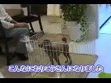 噛む犬・吠える犬のしつけ方にはコツがあります!犬の噛み癖・無駄吠えの治し方DVD動画