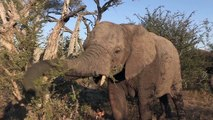 Sound of the African Bushveld, Elephants - AFRICAN WILDLIFE