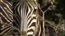 Animal Planet Discovery Channel Wild Life Documentary 2015 National Geographic Wildlife 4