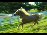 2010 Ivory Pal Photo Shoot with World Renown Equine Photographer Bob Langrish