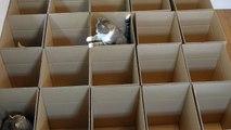 Des chats et des boites suffisent à passer un moment très drôle et calins