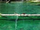 Otter at Hanging Lake (uno)