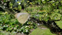 Life in the Undergrowth - 02 - Taking to the Air