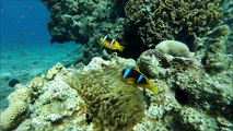 Diving in the Red Sea, Almog Beach, Eilat
