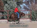 MIGHTY SURPRISED 2010 gelding SOLD (by Jerry Lees Surprise)