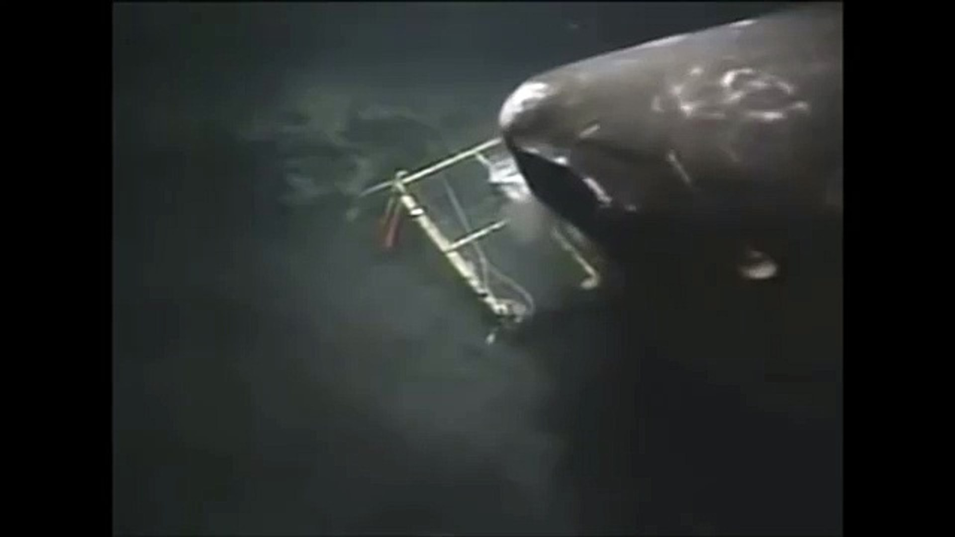 Megalodon Shark Caught on Deep Sea Camera
