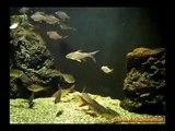 Zoo Safari di Pombia Novara L'acquario