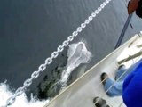 Dolfijnen Nieuw Zeeland