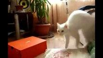 Les chats font que des bêtises (ou pas)