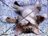 alcuni modi strani di dormire.. animali pazzi [ video divertenti ]