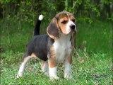 60 fotos bonitas, algumas raças de cães - Schöne Fotos, einige Hunderassen - Belles photos, certaines races de chiens