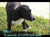 SATO dogs for adoption direct from Vieques PR.