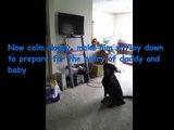 Aprenda como apresentar um recém-nascido a um cão