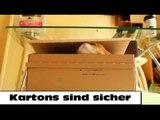 Katzen und Kartons: Warum Katzen Kartons lieben?