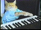 Play Sarah Palin's Career Off, Keyboard Cat!