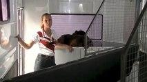 Horse Floats for Sale, New Horse Floats, Horse Floats Australia
