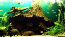Akwarium Biotop Ameryka Południowa