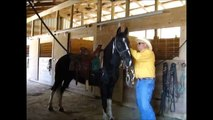 Apache Safe Smooth FEARLESS and FUN Spotted Saddle Tennessee Walker Trail Horse For Sale