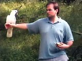 Our experience with wild cockatoos