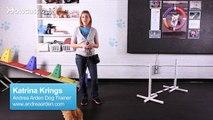 How to Teach a Corgi Tricks   Dog Tricks