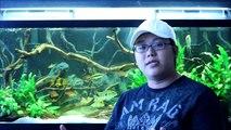 My Top 3 - Aquarium Driftwood