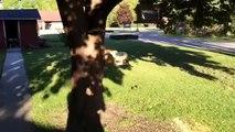 Un geai (oiseau) coincé dans la mangeoire à écureuil!