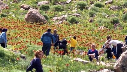 """Tunceli'nin dağları """"ağlayan gelinler""""le süslendi"""