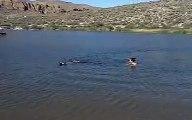 Akitas de MacLeod, Swimming Akita (Katana)