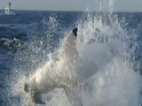 Furia Animal- Ataque de Tubarões \ 2