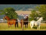 Lucky Horse Ranch,Pferde,Horses,Cavalli,Konie,Caballos,лошади,koně,atlar,lovak,άλογα,말,马匹,馬,ม้า,马